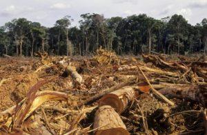 Difesa dell'ambiente questa sconosciuta. L'ambiente deve essere tutelato e per farlo è necessario il rispetto, dalle piccole cose si può ottenere una grande differenza.