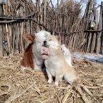 Pasqua basta mangiare cuccioli